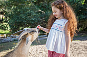Girl feeding animal in forest