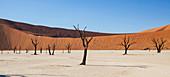 View of sunny desert