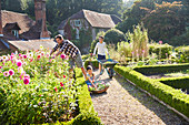 Family gardening in sunny flower garden