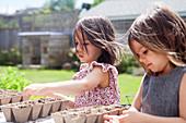 Girl sisters planting seedlings in sunny yard