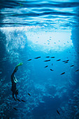 Young woman snorkelling underwater among fish
