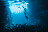 Young woman snorkelling among schools of fish