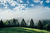 Tranquil scene fog break over sunny green trees