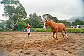 Young woman training horse in rural dirt paddock