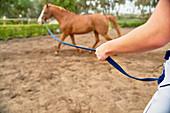 Horse training in rural paddock