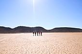 Group walking along sunny cracked earth South Africa