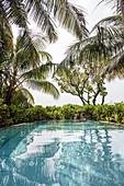 Tropical palm trees surrounding man reading book, Maldives