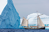 Ship sailing along majestic icebergs on