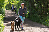 Woman with dogs walking on sunny trail in park