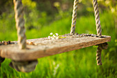 Delicate white flowers on rustic swing in sunny garden