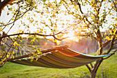 Hammock in sunny tranquil garden