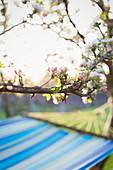 Flowering tree over hammock in tranquil garden