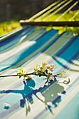 Flowering branch on sunny hammock