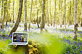Friends video chatting on laptop screen in sunny woods