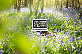 Friends video chatting on laptop screen in bluebell woods