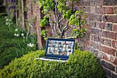 Friends video chatting on laptop screen in garden