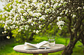 Book and water on table below flower tree in garden