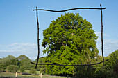 Wood stick frame over sunny green tree