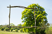 Wooden stick frame over sunny green tree and park