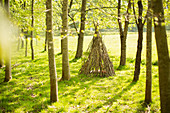 Branch teepee in sunny woodland