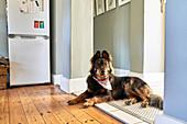 Dog laying in kitchen doorway