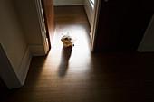 Portrait dog in doorway