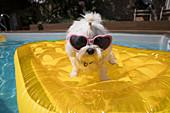 Dog in heart shape sunglasses on pool raft