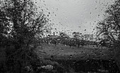 Raindrops on window with view of trees