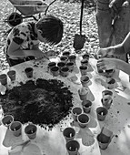Mother and son potting seedlings in flowerpots