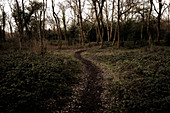Path through tranquil autumn woods