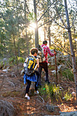 Young couple with backpacks hiking in sunny woods
