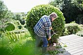 Senior man pruning bush with shears