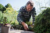 Senior man gardening in sunny backyard
