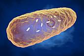 Yersinia pestis bacterium, illustration