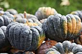 Nutmeg Pumpkins