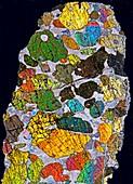 Chondrodite, polarised light micrograph