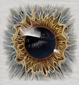 Dry Eye, Illustration