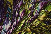 Nicotinamide and Urea Mixture, Polarized Light Microscopy