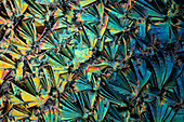 Vitamin-B3 (Nicotinamide), Polarized Light Microscopy