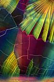 Malic Acid, Polarized and Dark Field Micrograph
