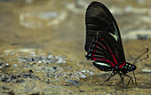 Butterflies and Moths on Amazonian Riverbank