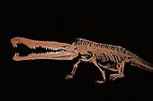 Redondasaurus bermani