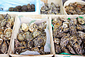 A selection of oysters at a market