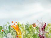 Fresh salad ingredients – lettuce, vegetables and herbs