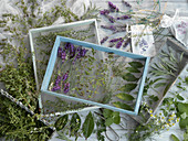 Herbs being dried