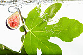 Figes and a fig leaf falling into fresh water