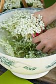 Cleaning elderflowers