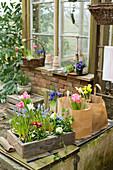 Frühlings-Arrangement auf der Terrasse mit bepflanzter Schublade