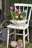 Alte Suppenterrine mit Tulpen, Netziris, Tausendschön, Traubenhyazinthen und Hyazinthe