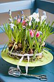 Blumentorte aus Tulpen, Traubenhyazinthen und Netziris